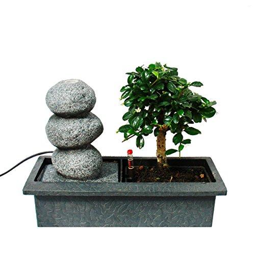 Indoor-Bonsai mit Zimmer-Brunnen